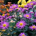 Purple In Garden by Camelia C