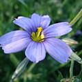 Purple In The Wild by Liz Vernand
