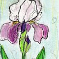 Purple Iris by Christopher O'Kelley