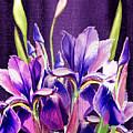 Purple Iris Dance  by Irina Sztukowski