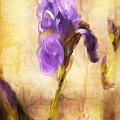 Purple Iris by Diana Ralph