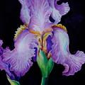 Purple Iris II by Edoen Kang