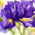 Purple Iris by Lila Van Pelt