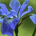Purple Iris by Lynellen Nielsen