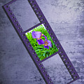 Purple Iris Passion by Andrea Swiedler