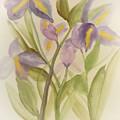 Purple Iris Watercolor by Maria Urso
