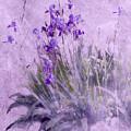 Purple Irises by Susan Eileen Evans