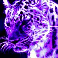Purple Jaguar by Nick Gustafson
