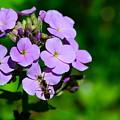 Purple by Jeffery Fannin
