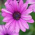 Purple by Jennifer Englehardt