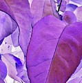 Purple Leaves by Peggy Leyva Conley