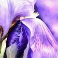 Purple Life by Krissy Katsimbras