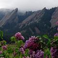 Purple Lilacs Flatirons by George Tuffy