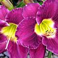 Purple Lilies by Jean Hall
