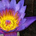 Purple Lotus Flower - Zen Art Painting by Sharon Cummings