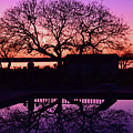Purple Majesty by Brandy Stinchcomb