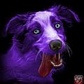 Purple Merle Australian Shepherd - 2136 - Bb by James Ahn