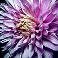 Purple Mum by Steph Gabler