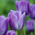 Purple Ones by Nick Boren