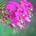Purple Orchid Branch by Anastasy Yarmolovich