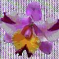 Purple Orchid Design by Rosalie Scanlon
