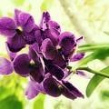 Purple Orchid by Jeff Breiman