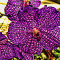 Purple Orchid by Paul Cutright
