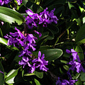Purple Orchid Plant by Zina Stromberg