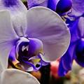 Purple Orchid by VLee Watson