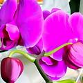 Purple Orchids by Ed Weidman