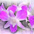 Purple Orchids by Judi Saunders