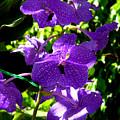 Purple Orchids by Susanne Van Hulst