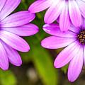 Purple Petals by Az Jackson