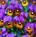 Purple Pansies by Charmaine Zoe