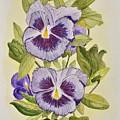 Purple Pansies by Linda Brody