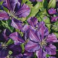 Purple Persuasion by Helen Shideler