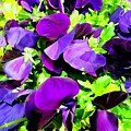 Purple Petals by Ed Weidman