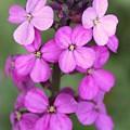 Purple Pink Flower.... by Martina Fagan