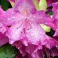 Purple Pink Horizontal by Marty Koch