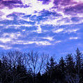 Purple Puffs by Timm Armitage