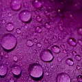 Purple Rain by Chris Berry