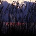 Purple Rain by David Lee Thompson