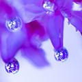 Purple Rain Purple Rain by Darby Donaho