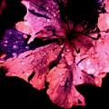 Purple Rain by Trudi Southerland