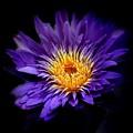 Purple Reign by Jessica Jenney