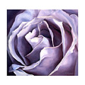 Purple Rose by Elise Leibnitz