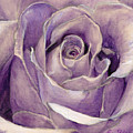 Purple Rose by Portraits By NC