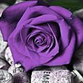 Purple Rose On Cork by Silva Wischeropp