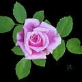 Purple Rosebud2 Cutout by Shirley Heyn