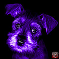 Purple Salt And Pepper Schnauzer Puppy 7206 F by James Ahn